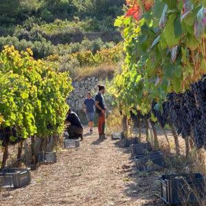 Visita bodega y viñedos