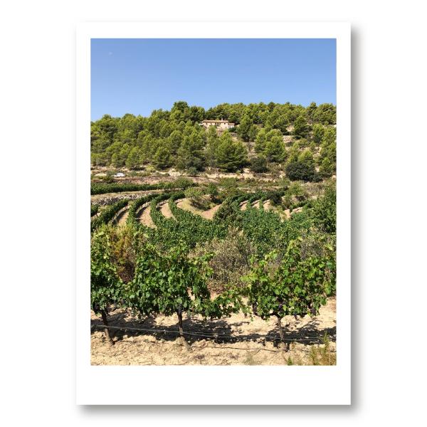Visitas bodega, finca y viñedo Mas de Sella