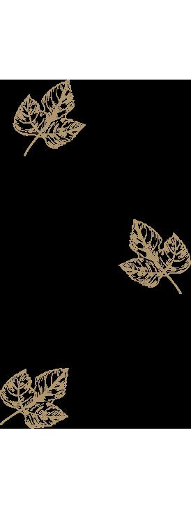 Nosotros Mas de Sella hojas