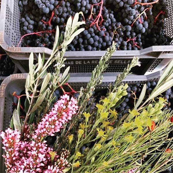 Vinos Caja de uvas Mas de Sella